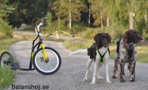cykel med hundar