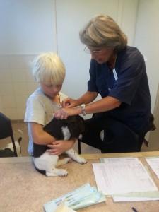 veterinärbesiktning m Hampus