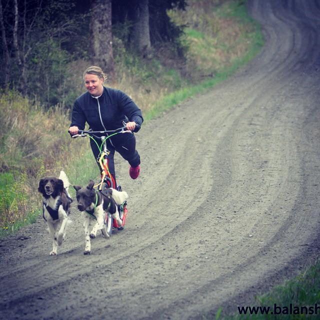 dogbike